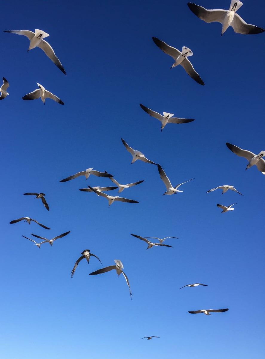 Texas Seagulls by Ziad El-Zaatari, MD