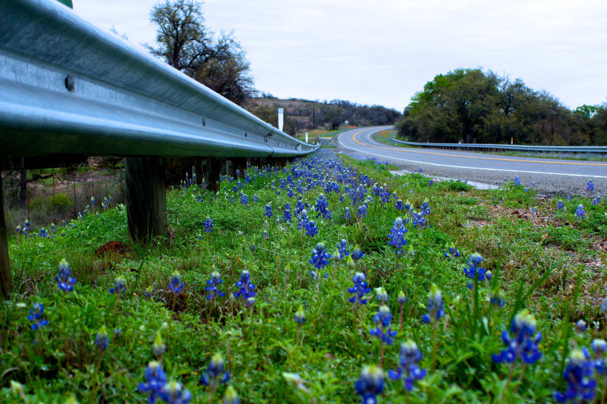 The Bluebonnets by Meredith Treadway, RN
