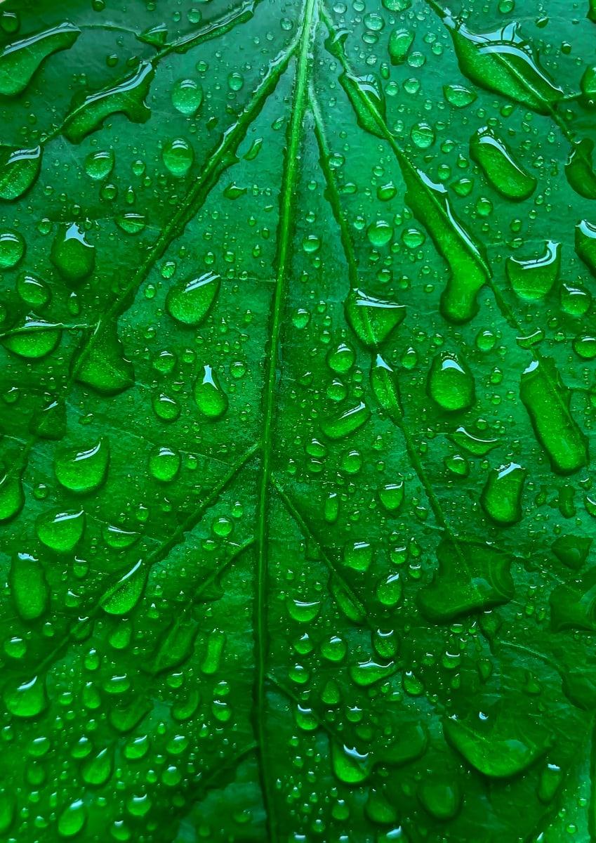 Garden Leaf Water Drops by Ziad El-Zaatari, MD