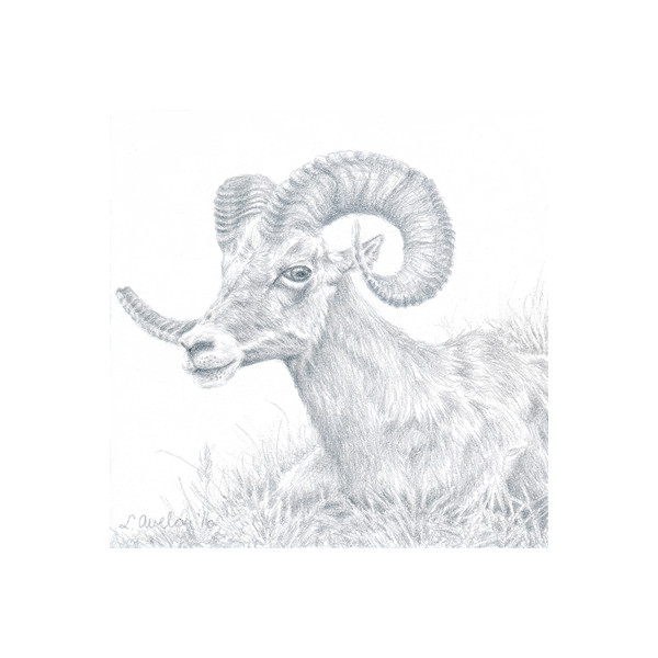 The Ram by Lonetta Avelar