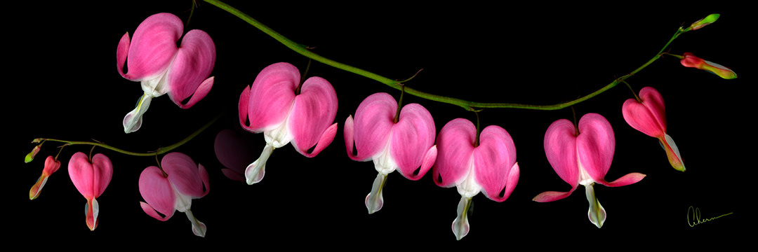 Dicentra Necklace