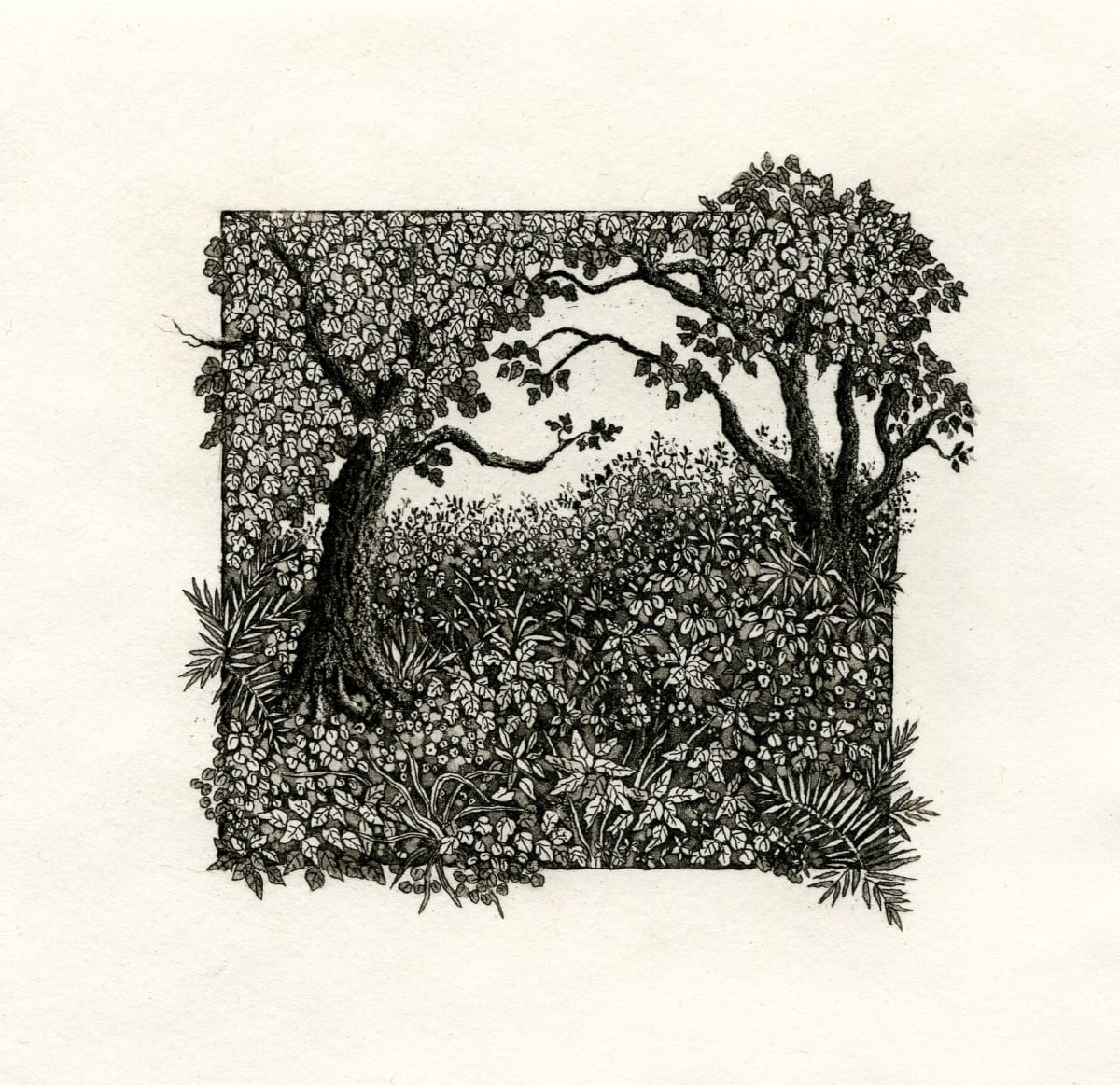 Window in the woods by stephanie Jane Rampton
