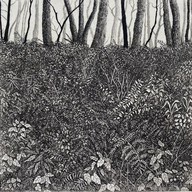 Fern bower by stephanie Jane Rampton