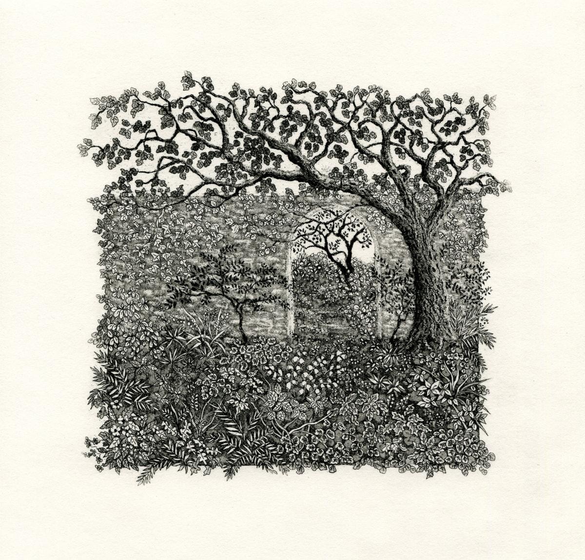 Beyond the walled garden by stephanie Jane Rampton