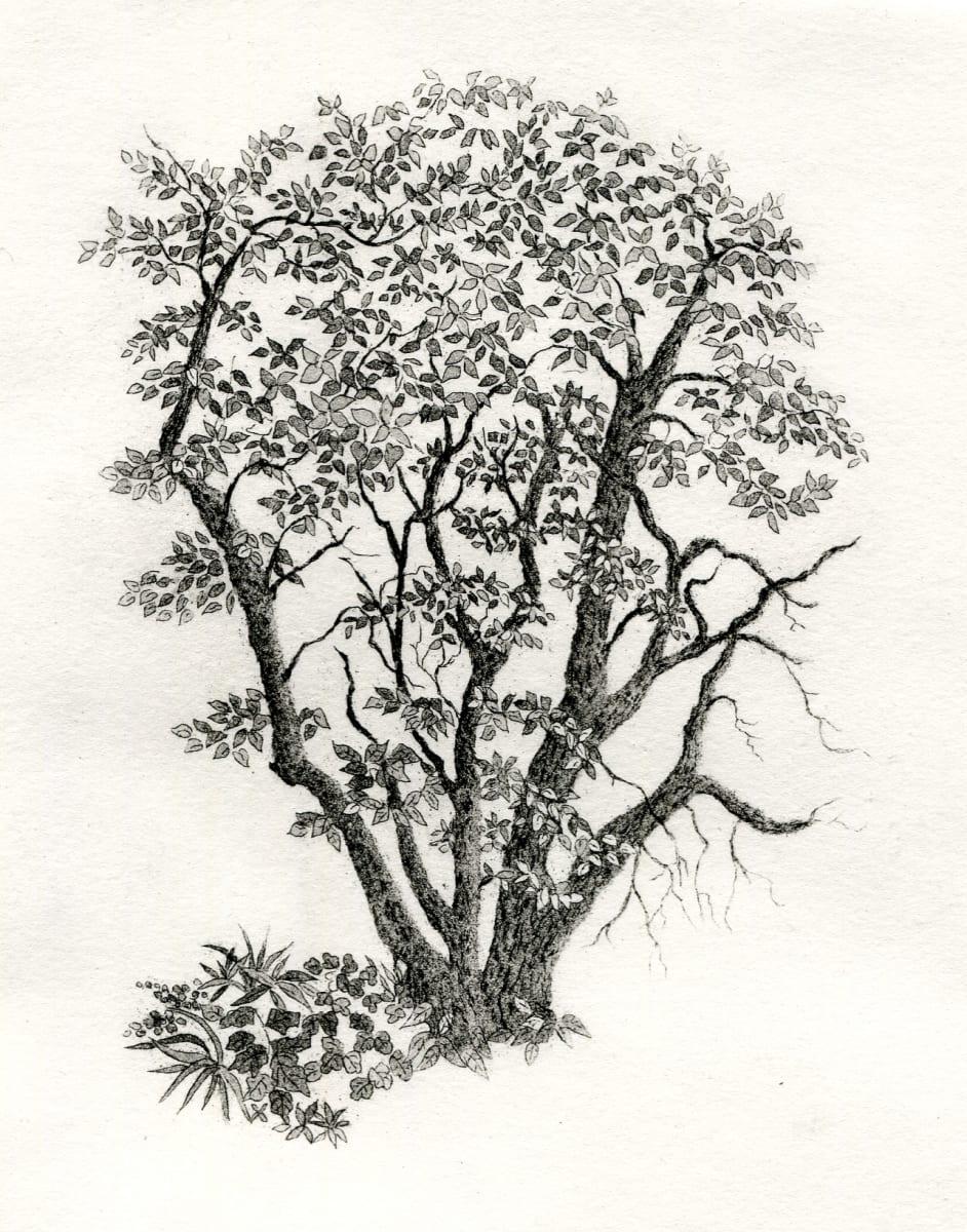 Lowy's tree by stephanie Jane Rampton