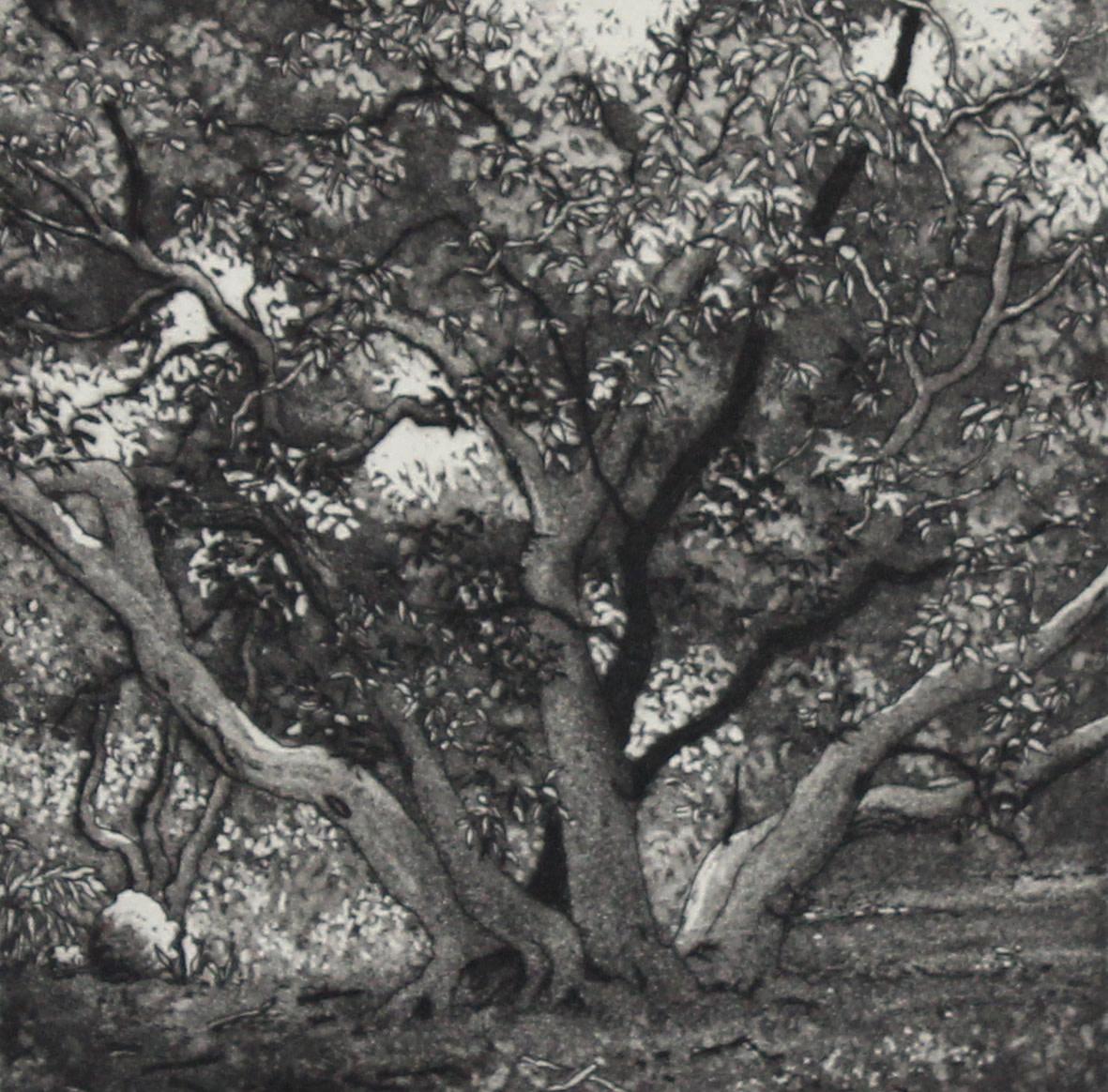 birdwood grove by stephanie Jane Rampton