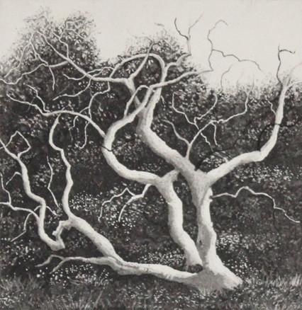 coastal tree by stephanie Jane Rampton