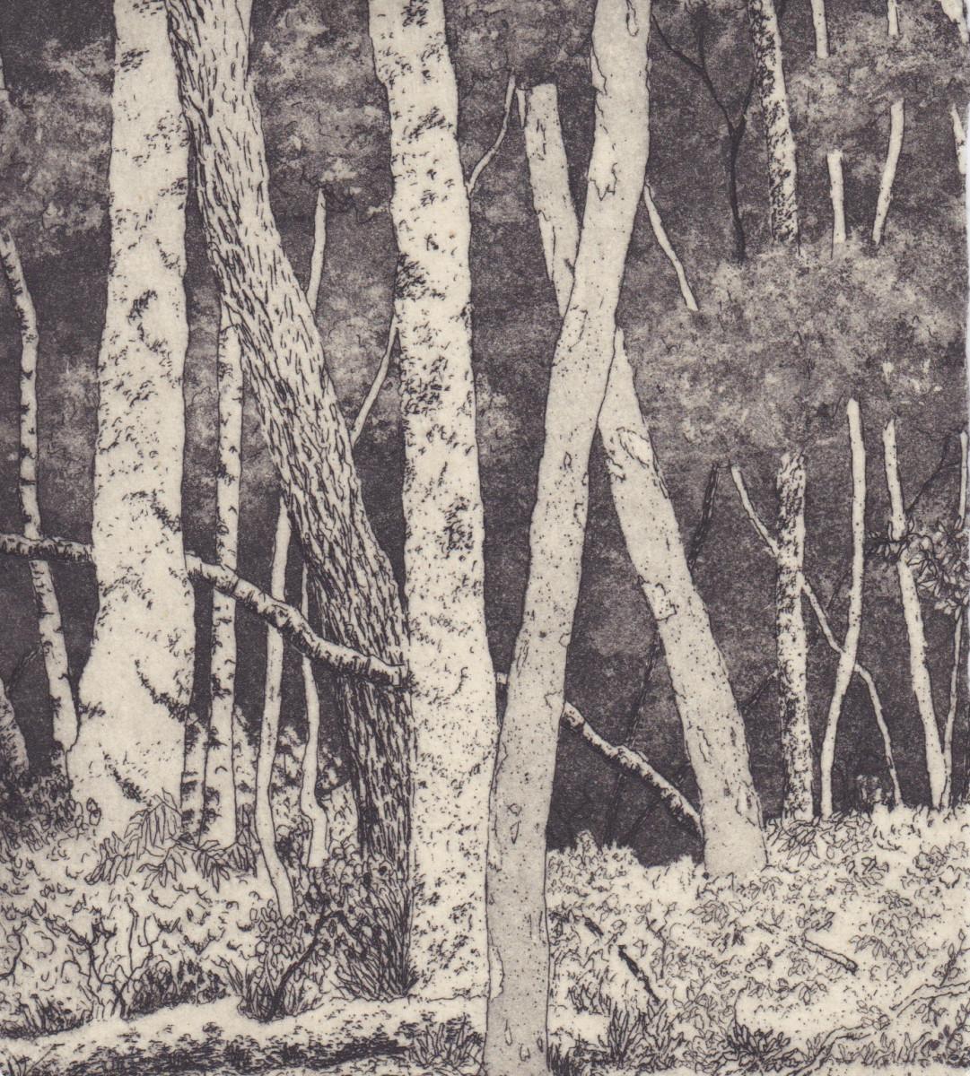 deep in the woods by stephanie Jane Rampton