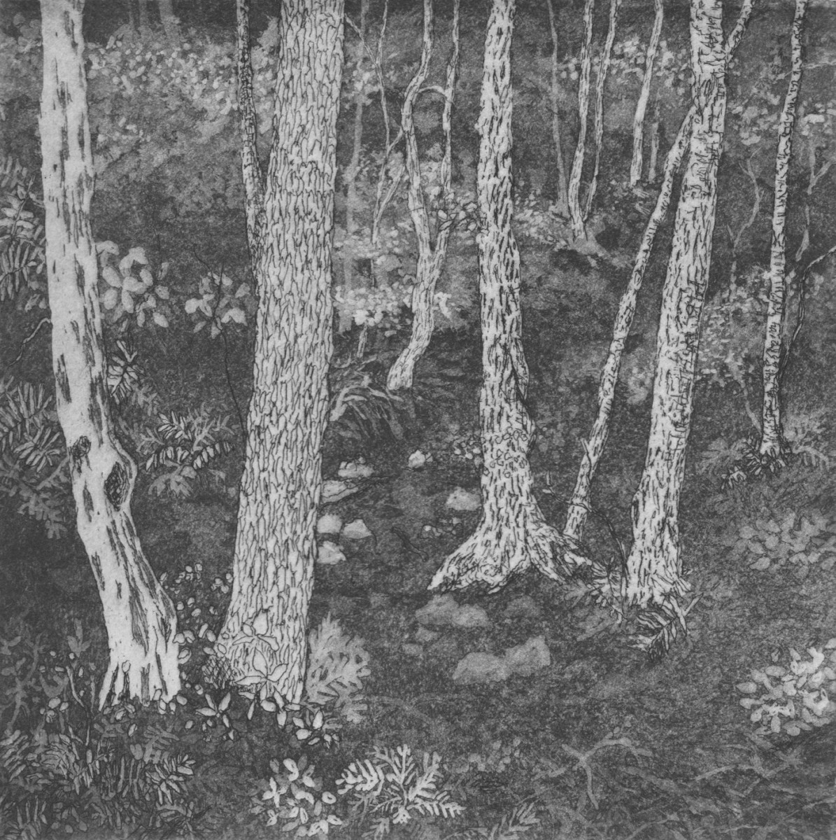 in the woods by stephanie Jane Rampton