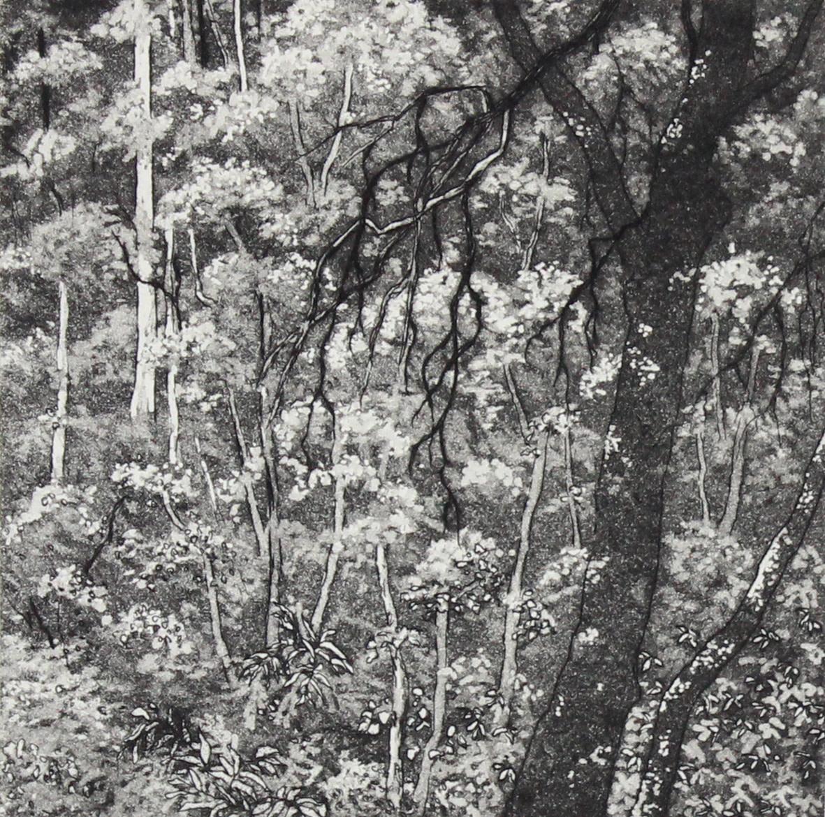otway treetops by stephanie Jane Rampton