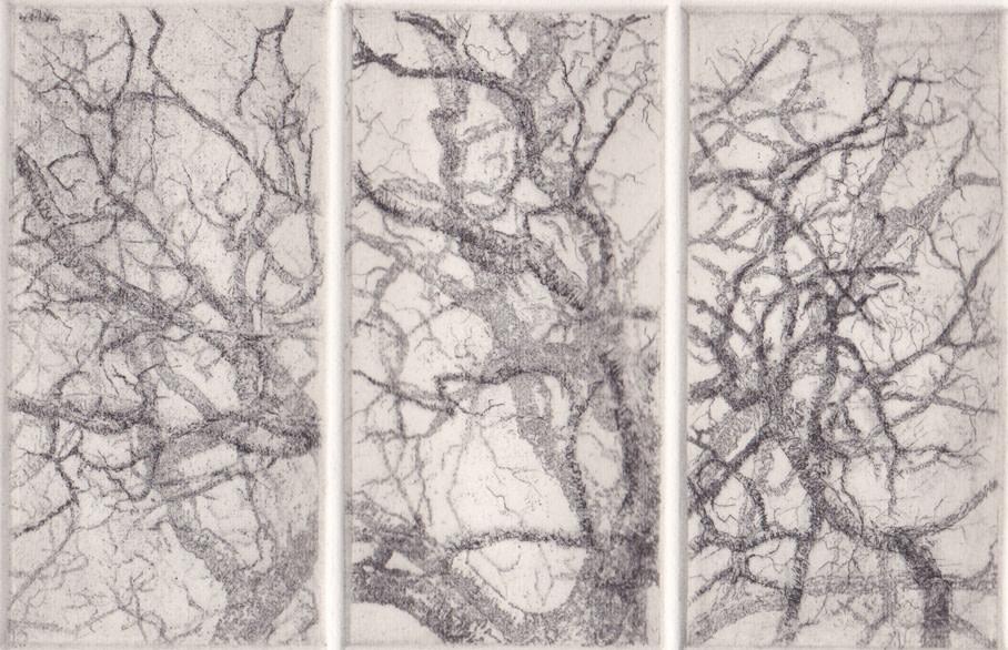 separation oak II by stephanie Jane Rampton