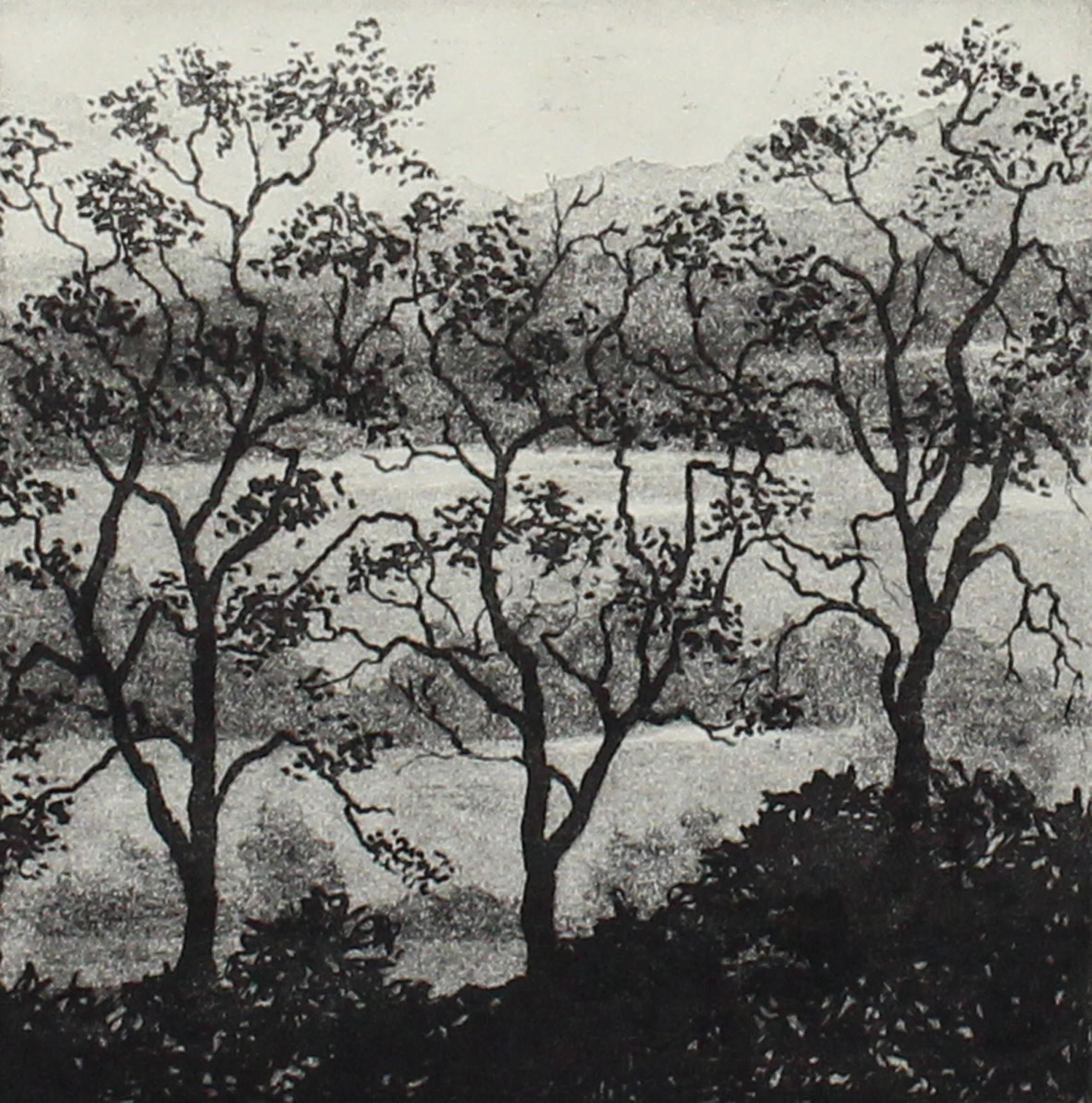 three trees and landscape