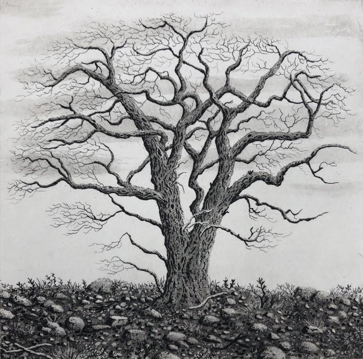tree series I by stephanie Jane Rampton
