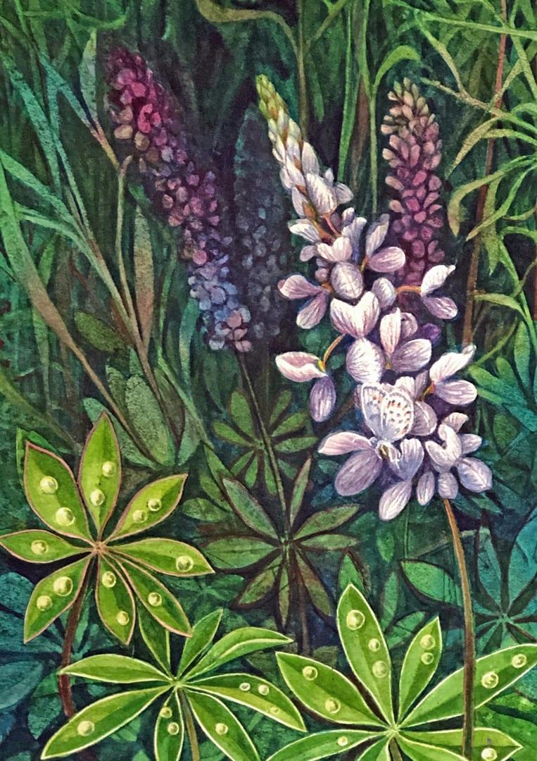 Wild Lupine Study an original watercolor on paper by Helen R Klebesadel