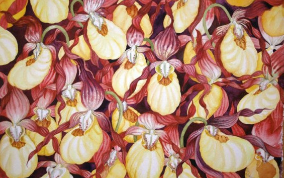 Yellow Lady Slippers IV by Helen R Klebesadel