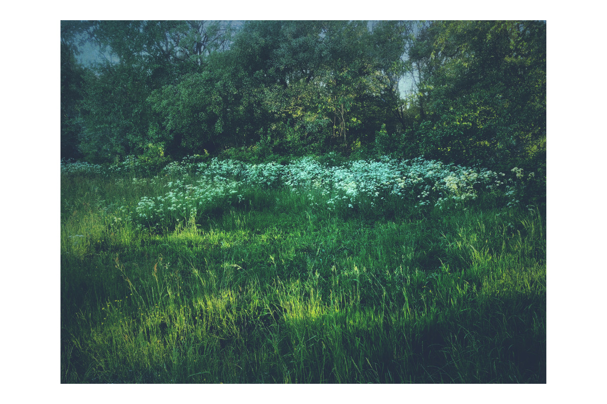 #POTD 20180522 Ode to Monet