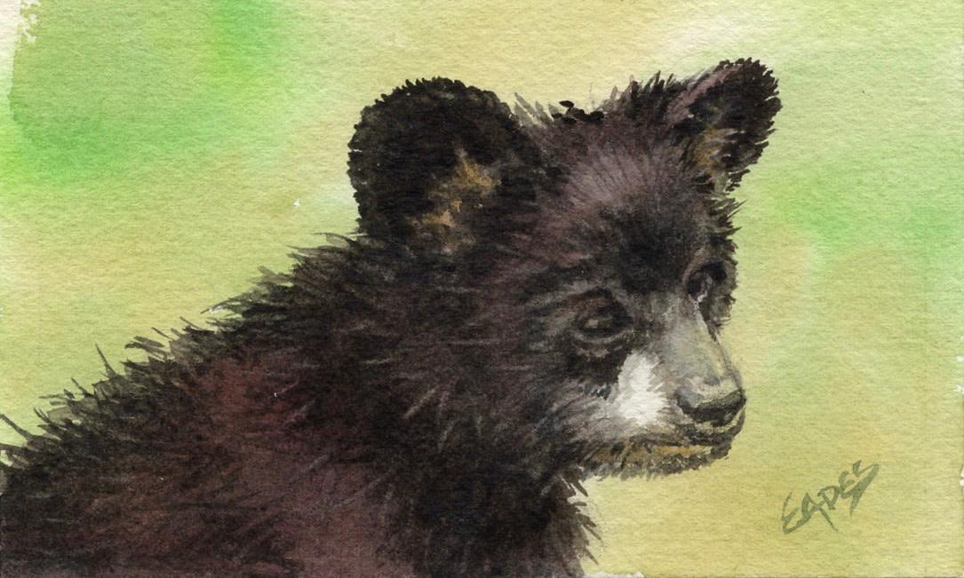 Spring Cub by Linda Eades Blackburn