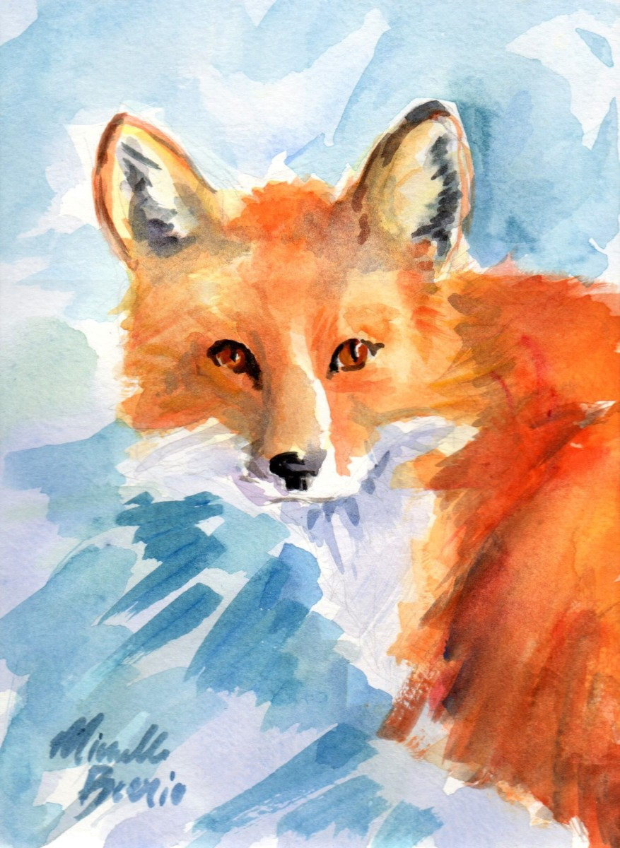 Vulpes vulpes by Michelle Boerio