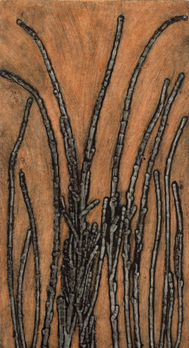 Albany Allocasuarina 2/6 by Jacky Lowry