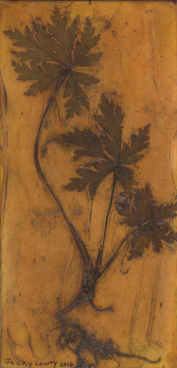 Albany Geranium 1 Plate by Jacky Lowry