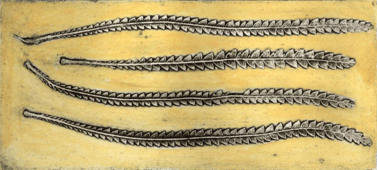 Banksia (Dryandra) 2, 6/6 by Jacky Lowry