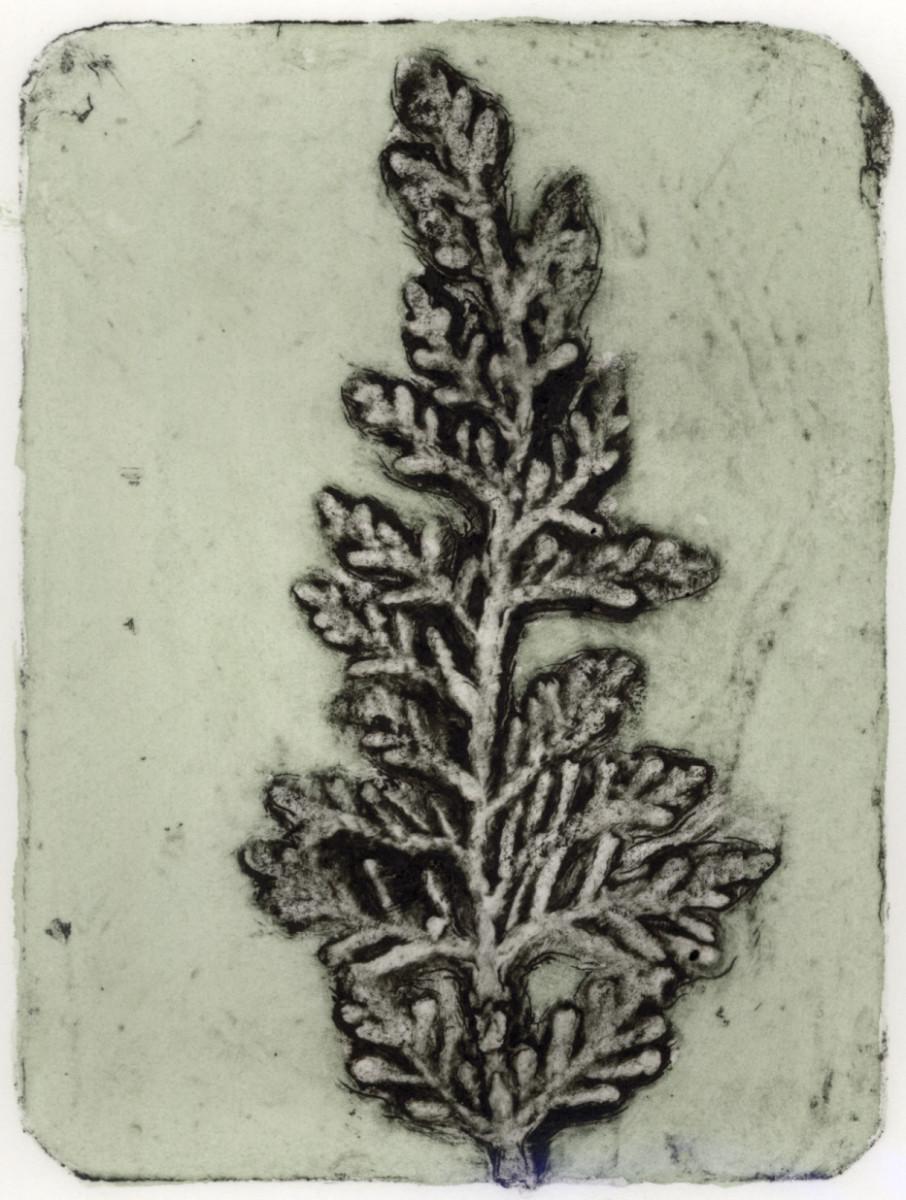 Cypress 2, 6/10 by Jacky Lowry