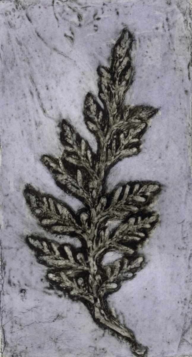 Cypress 4 1/10 by Jacky Lowry