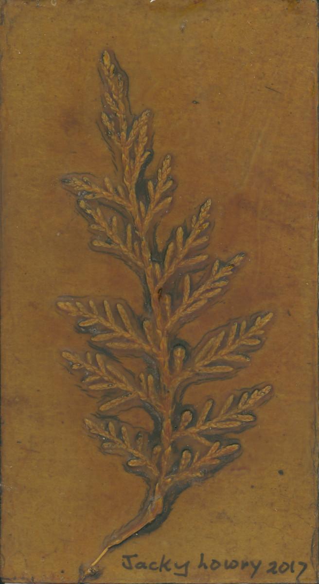 Cypress 4 by Jacky Lowry