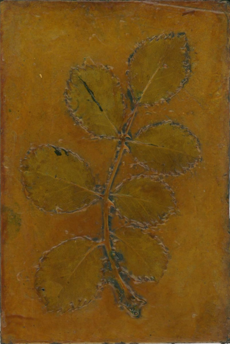 Rose 1 by Jacky Lowry