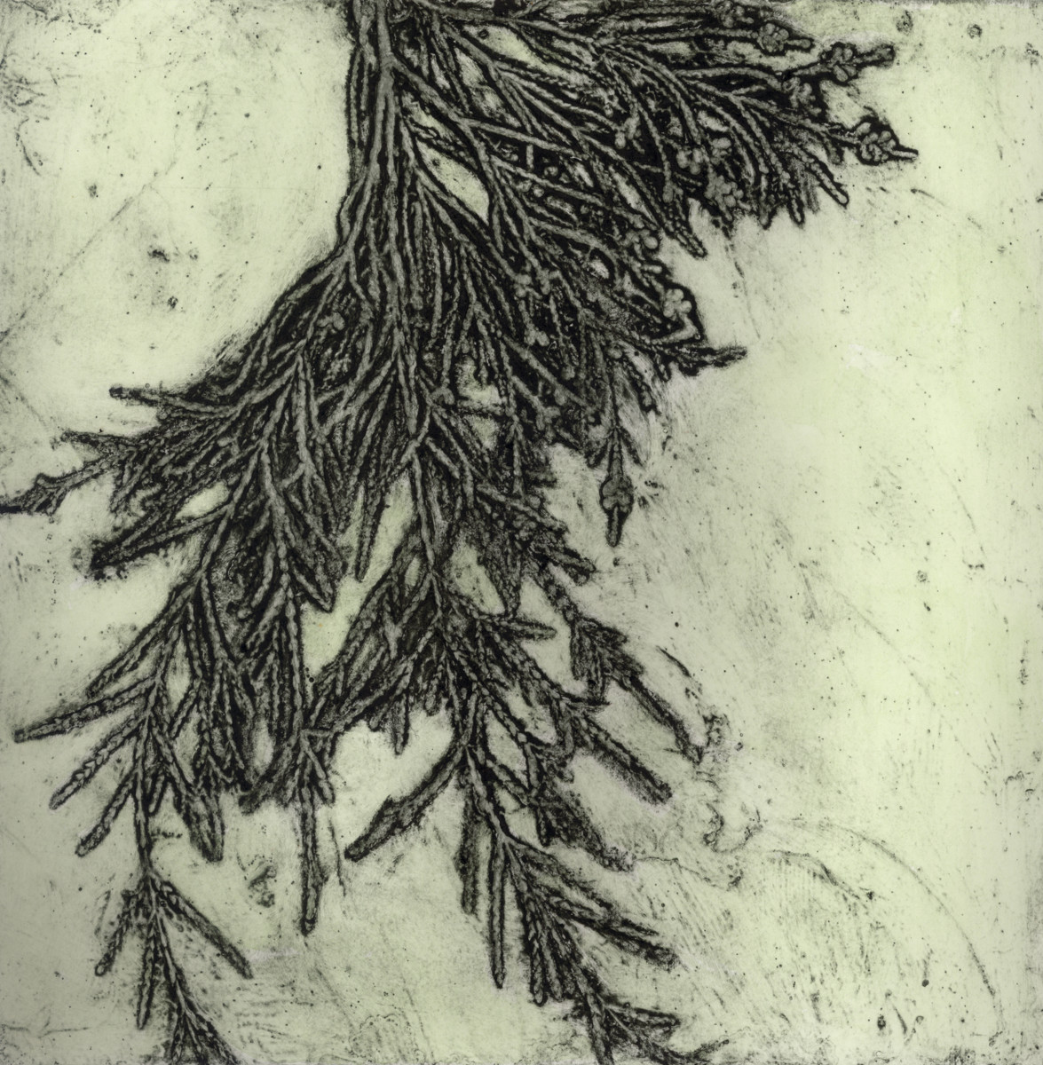 Weeping Tree with Flowers 1 3/10 by Jacky Lowry
