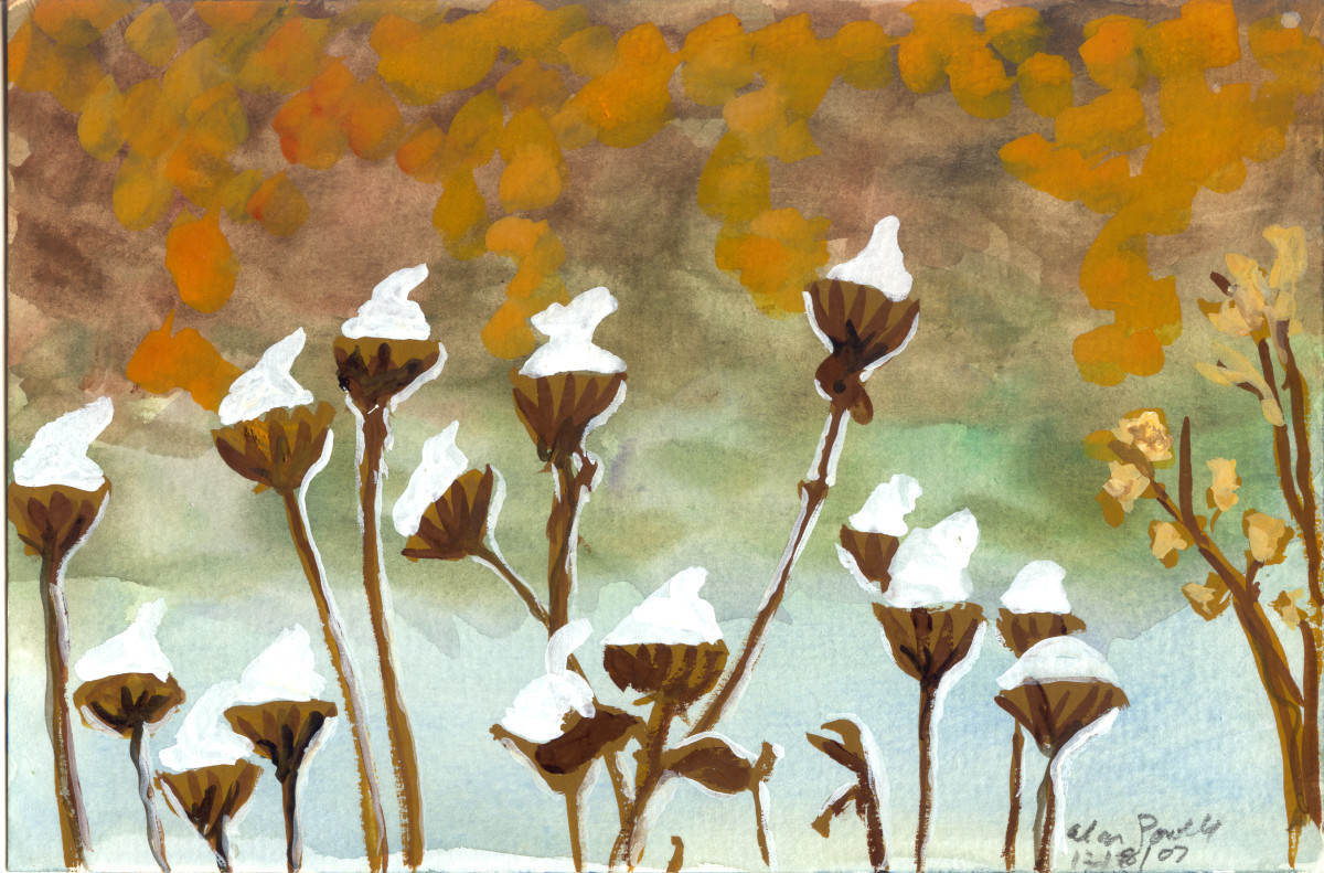 December 8, 2007; Cotton Buds by Alan Powell