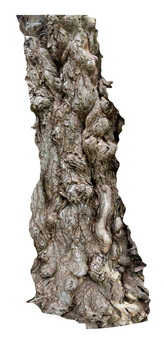 Long Bark by Alan Powell