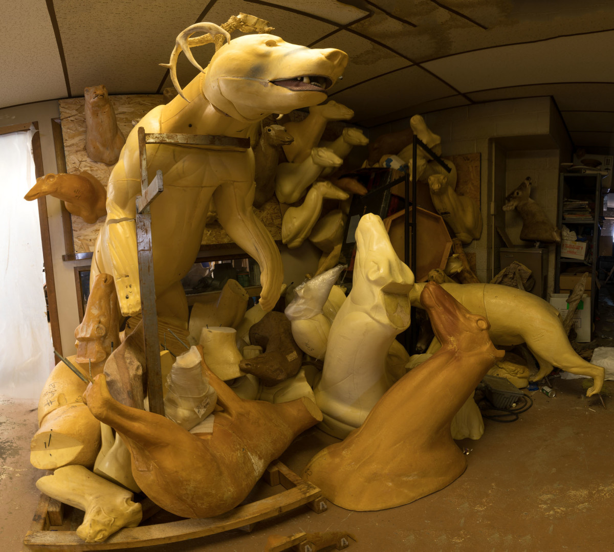 Taxidermy Forms Left Side by Alan Powell
