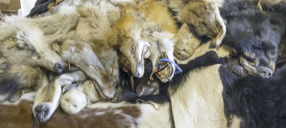 Wolves, Foxes, Bears  Skins