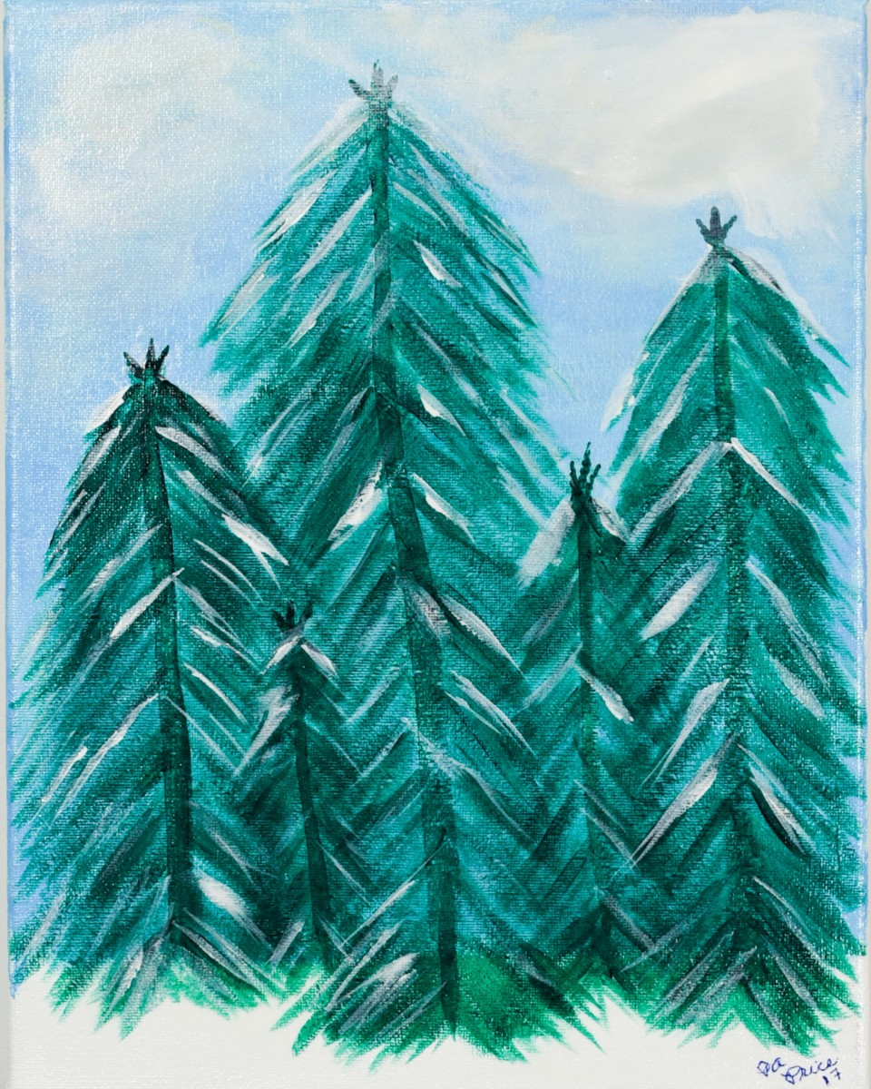 Evergreens on a Winters Day in Colorado