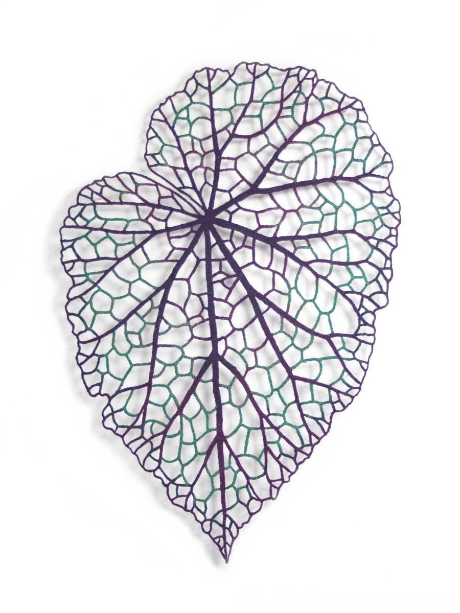 Begonia Leaf (Begonia rex)
