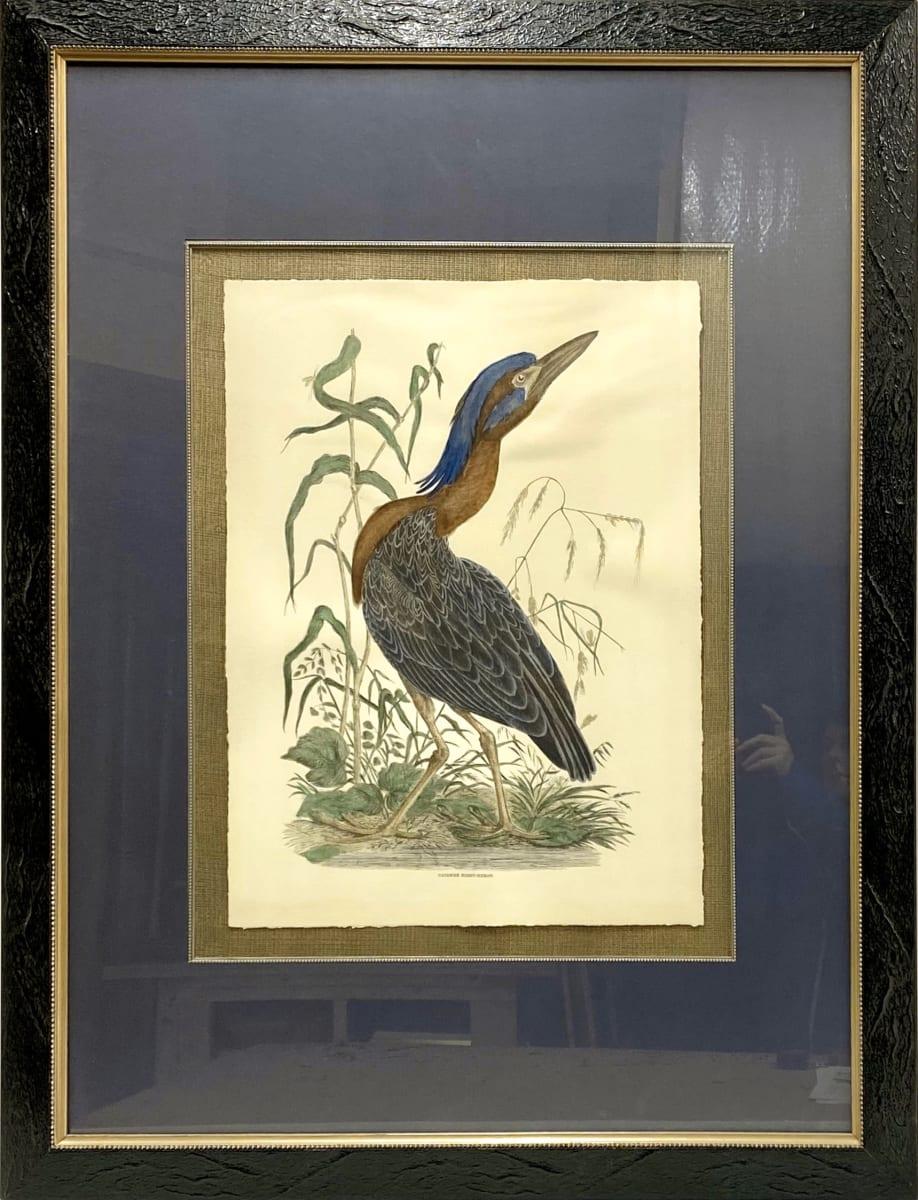 2717 - Cayenne Night Heron by Unknown
