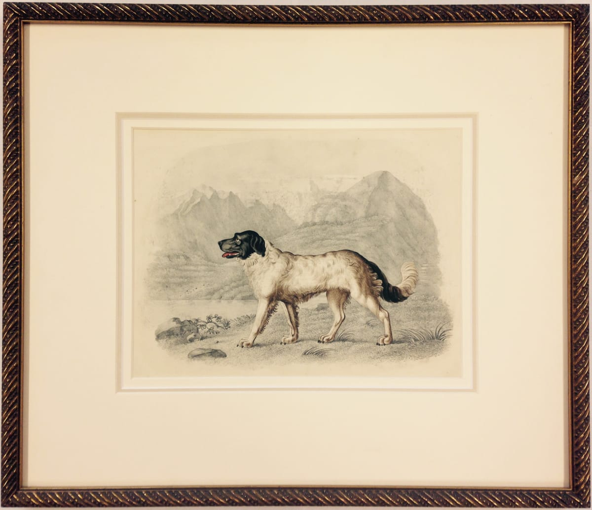 2031 - Dog Portrait by William Gunton