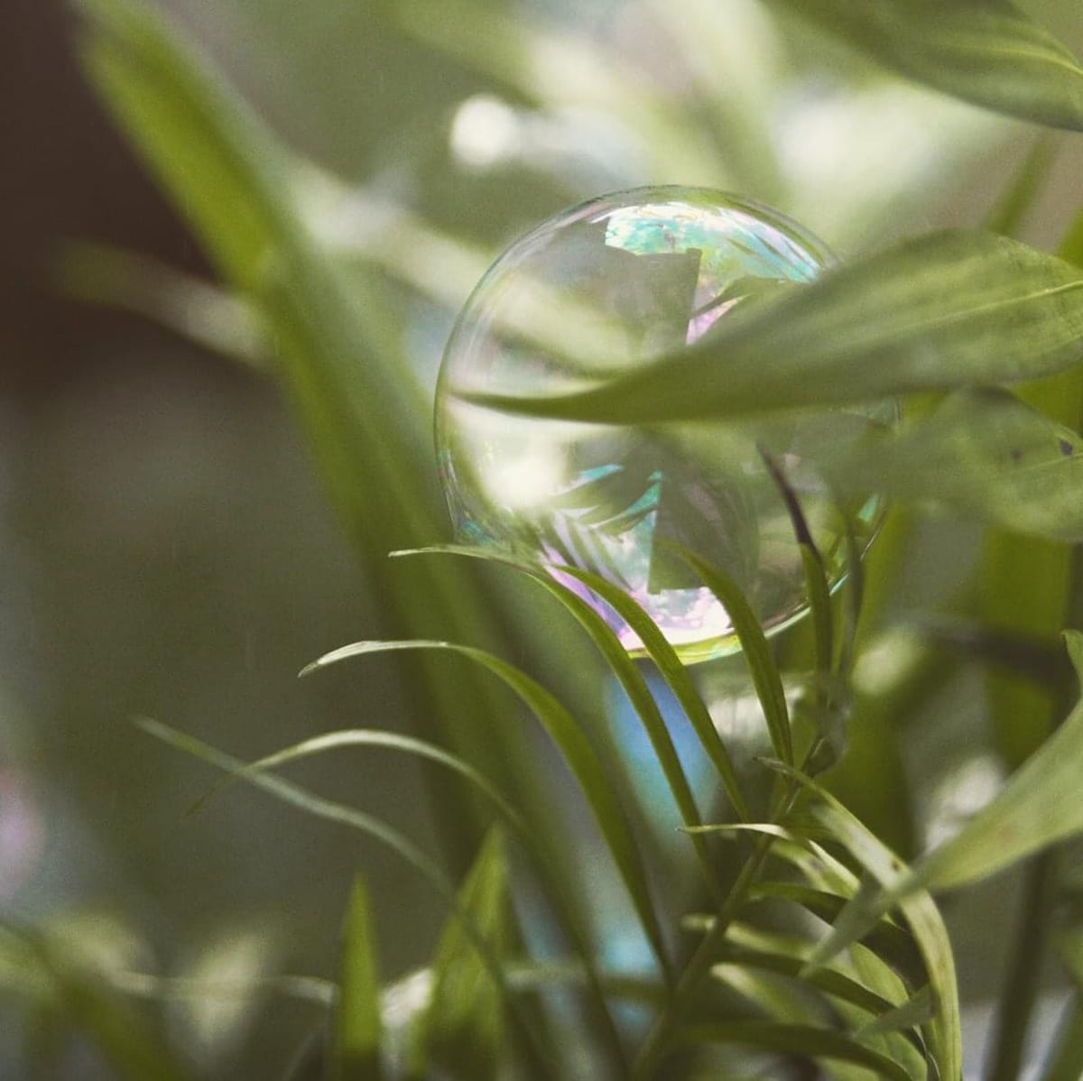 Palm Holding a Bubble by Sarah Flores