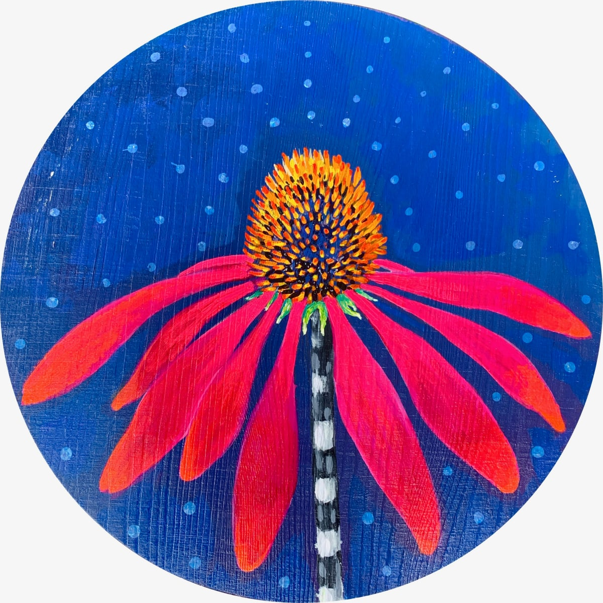 Echinacea by Kristie Mayeaux