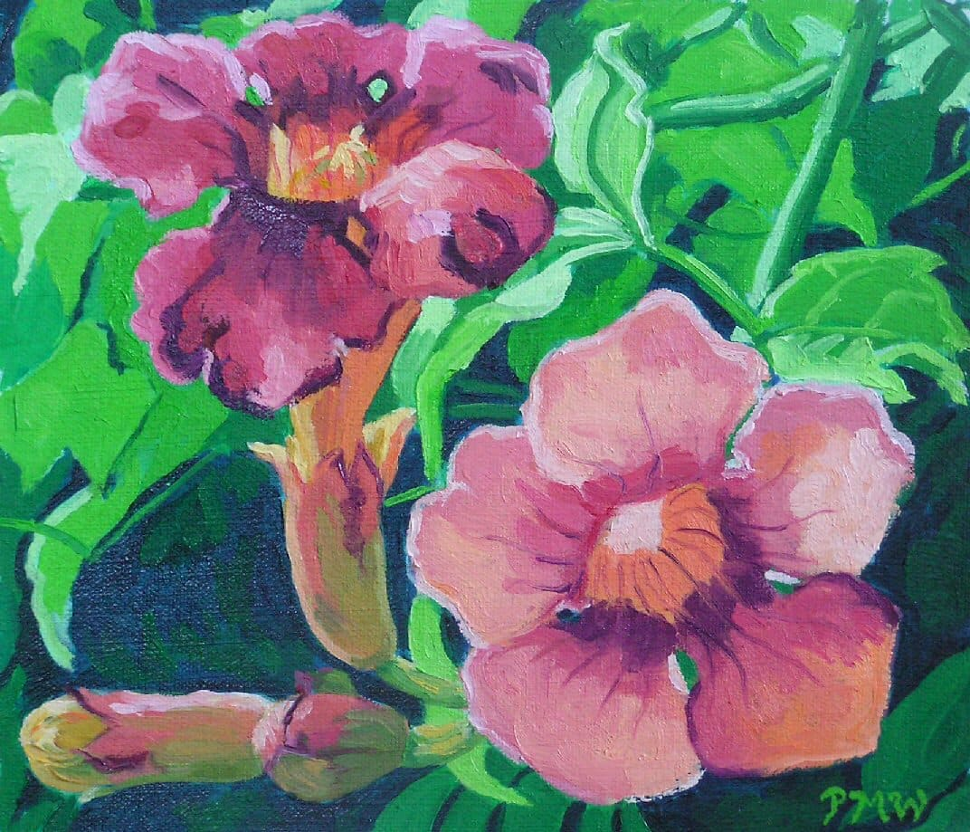 Trumpet Vine by Peggy Walters