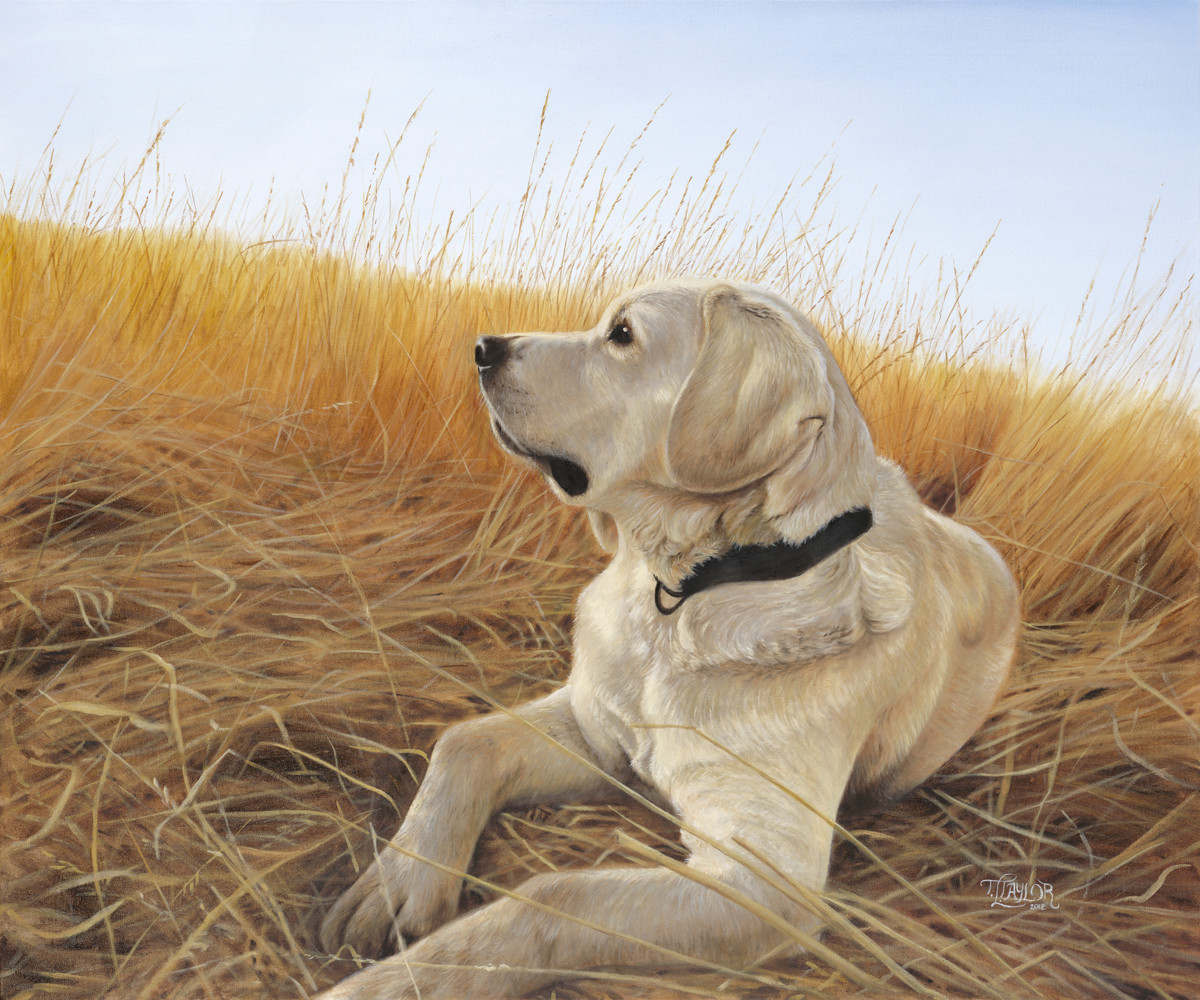 Waiting For The Birds by Tammy Taylor