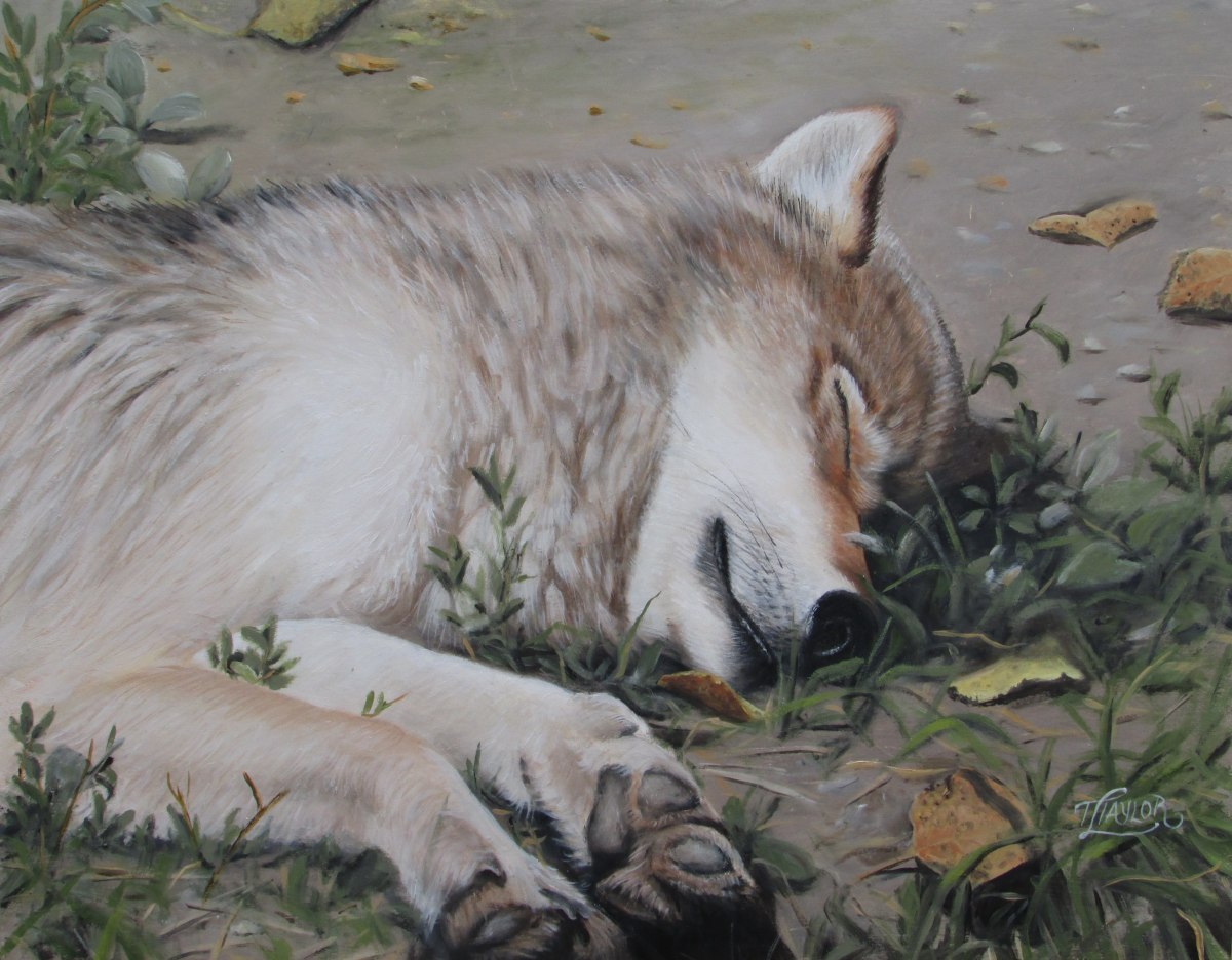 Afternoon Nap by Tammy Taylor