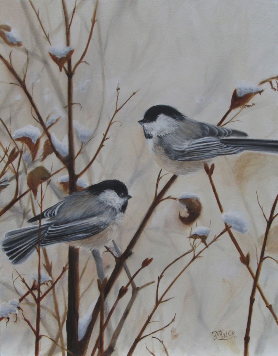 Chickadees by Tammy Taylor