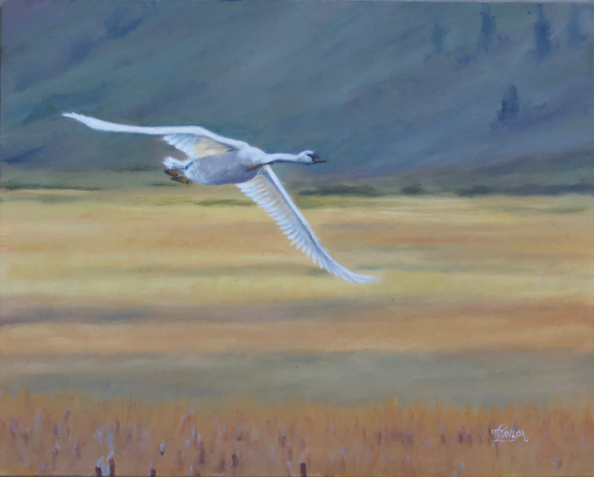 Fair Weather Flight by Tammy Taylor
