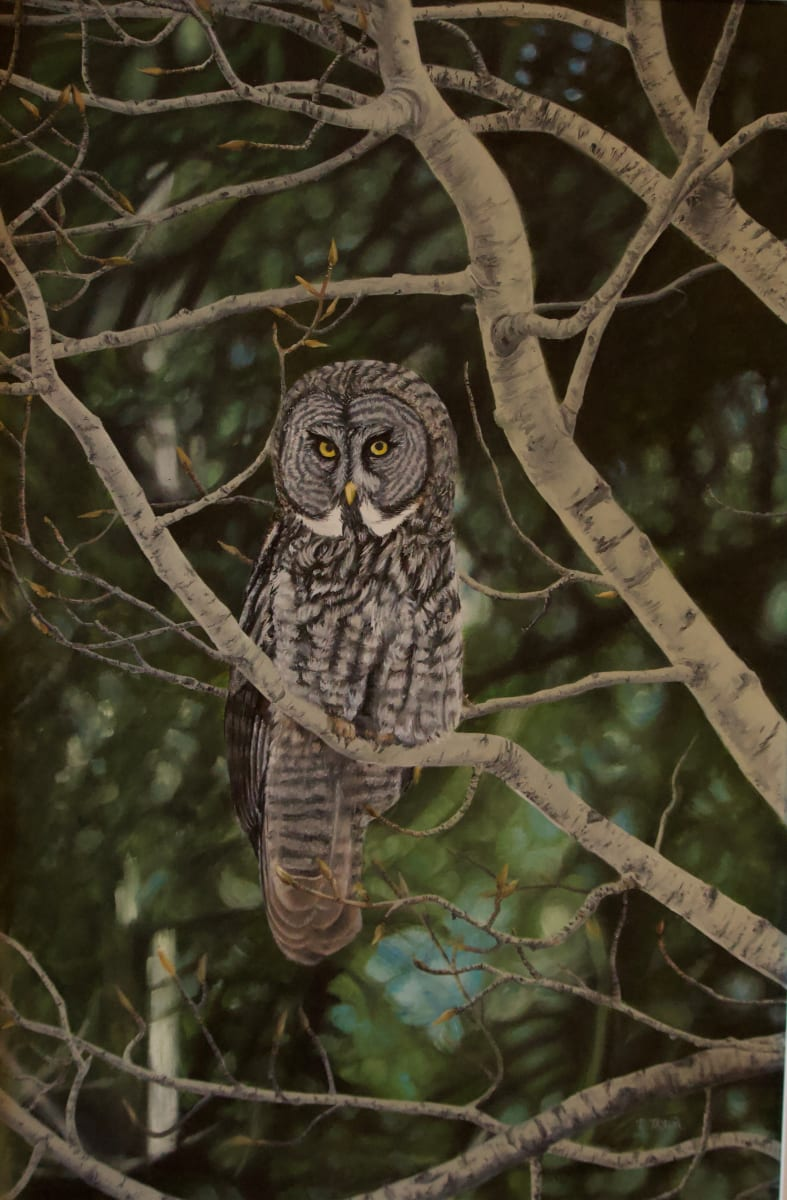 Watchful by Tammy Taylor