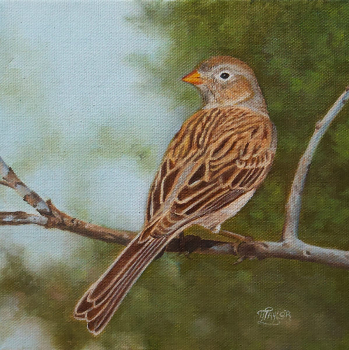 Worthen Sparrow by Tammy Taylor