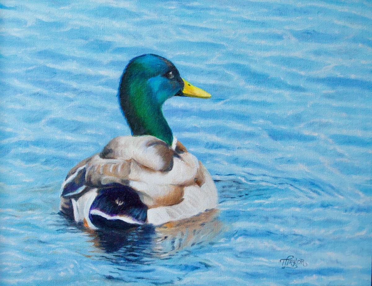 Solitary Swim by Tammy Taylor