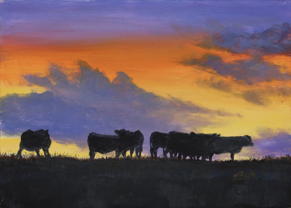 Angus Sunset by Tammy Taylor