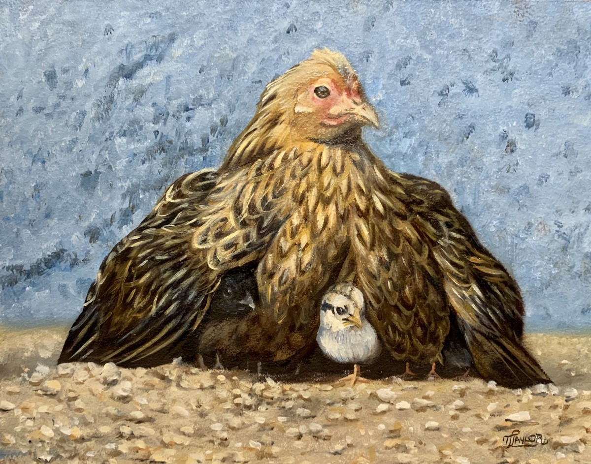 Old Mother Hen by Tammy Taylor